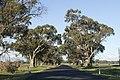 Rawsonville NSW 2830, Australia - panoramio (10).jpg