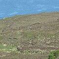 Red deer retreating - geograph.org.uk - 818756.jpg