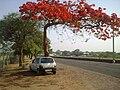 Red flowered tree.jpg