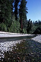 Redwood creek.jpg