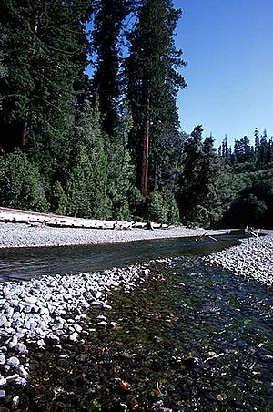 Redwood Creek (Humboldt County) - Redwood Creek in Redwood National Park