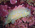 Reef1144 - Flickr - NOAA Photo Library.jpg