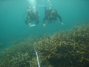 Reef Check - Divers performing a substrate survey on the Great Barrier Reef in 2008. Notice the transect tape.