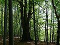 Rezerwat Ostra Góra Polska 2.jpg