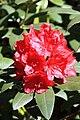 Rhododendronpark Bremen 20090513 011.JPG