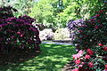 Rhododendronpark Bremen 20090513 139.JPG