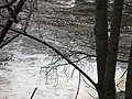 River Kelvin - geograph.org.uk - 632045.jpg