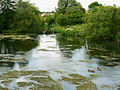 River Kennet and geese at Eddington - geograph.org.uk - 1353827.jpg