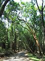 Road Through Bamboo Forest 1.jpg