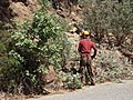Road side brushing project on the Sierra National Forest (3935509944).jpg
