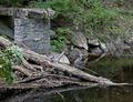Rock Creek Park, NW, Washington, D.C LCCN2010641487.tif