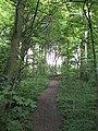 Rocks Plantation - geograph.org.uk - 1543359.jpg