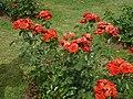 Roseto-di-roma-capitale---sito-di--il-cimitero-ebraico--dal-1645-fino-al-1934 9005796993 o 43.jpg