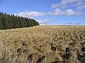 Rough upland grazing - geograph.org.uk - 340888.jpg