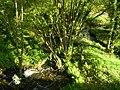Ruisseau de Crazius (3).jpg