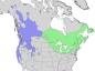 Salix lucida & lasiandra range map 3.png