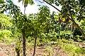 Samaná Province, Dominican Republic - panoramio (53).jpg