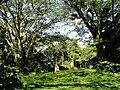 San Juan Botanical Garden - DSC07033.JPG