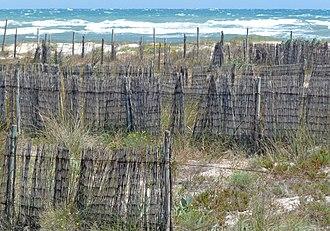 """Costa Cálida - San Pedro del Pinatar """"cañizo"""" and dunes"""