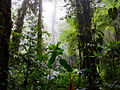 Santa Elena Cloud Forest Reserve.jpg