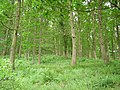 Sasel Wood - geograph.org.uk - 206210.jpg