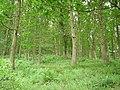Sasel Wood - geograph.org.uk - 206210.jpg