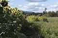 Sauvie Island Oregon (23793823488).jpg