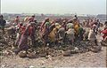 Scavenging - Science City Site - Dhapa - Calcutta 1993-02-27 276.JPG