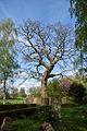 Schleswig-Holstein, Haselau, Naturdenkmal 23-02 NIK 3050.JPG
