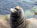 Sea Lion (1805635233).jpg