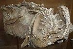 Seitaad ruessi holotype salt lake city.jpg