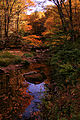 Seneca-creek-61 - West Virginia - ForestWander.jpg