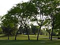 Sherry Golf Jerez - P1110768.jpg