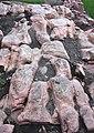 Sioux Quartzite (Paleoproterozoic, 1.65-1.70 Ga; Falls Park, Sioux Falls, South Dakota, USA) 5.jpg