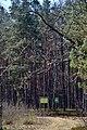 Skulyn Kovelskyi Volynska-Sosnyna-1 nature monument-view with boards.jpg
