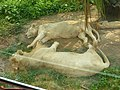 Sleeping Lions.jpg