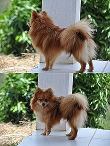 Dog Breed Names Capitalized