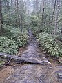 Small Creek - panoramio (1).jpg