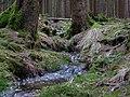 Small stream in the Taunus 6.jpg