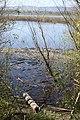 Smith & Bybee Lakes (13764444353).jpg