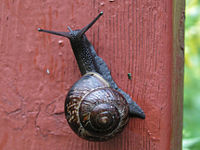 Snail on fence.jpg
