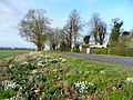 Snowdrops by Beeches Lane - geograph.org.uk - 1196861.jpg