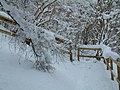Snowy footpath at Shin Falls - geograph.org.uk - 606041.jpg