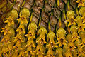 Sonnenblumenkern2.jpg