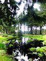 Soonwald - kleiner Waldteich bei Ellern - panoramio (1).jpg