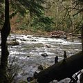 South Fork Snoqualmie River near Twin Falls.jpg