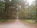 Spomenik prirode Rogot.jpg
