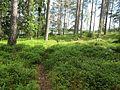 Stig i skogen vid Vatebosjön, 2009 - panoramio.jpg