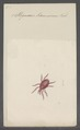 Stigmaeus - Print - Iconographia Zoologica - Special Collections University of Amsterdam - UBAINV0274 071 03 0005.tif