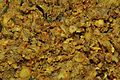 Stir-fried Mashed Potatoes - Kolkata 2011-04-15 2294.JPG